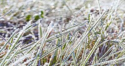 Acercar el reloj de hielo en la hierba derritiéndose a la luz del sol de la mañana almacen de video