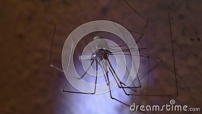 Acoplamento das aranhas da adega video estoque