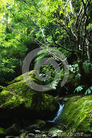 Acores; small jungle valley on flores