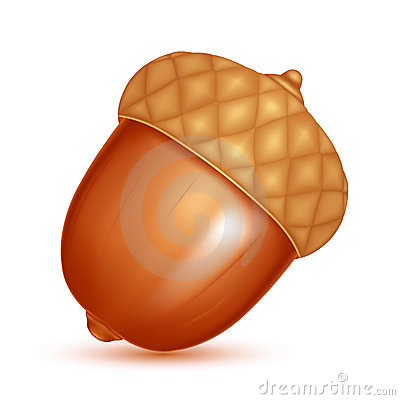 Acorn Stock Illustrations – 6,706 Acorn Stock Illustrations ...
