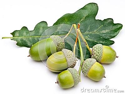 Acorn with leaf