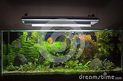Acquario d 39 acqua dolce tropicale fotografie stock libere for Pesci d acqua dolce acquario