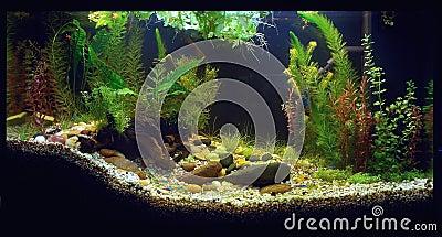 acquario domestico fotografia stock libera da diritti