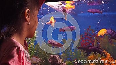 Acquario domestico con il pesce video d archivio