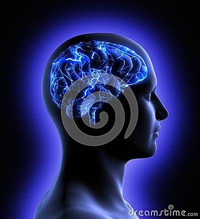 Activité de cerveau