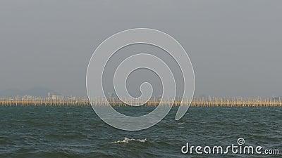 Acuicultura de la granja de la ostra de los crustáceos en el mar en Tailandia, Pattaya, Asia almacen de video