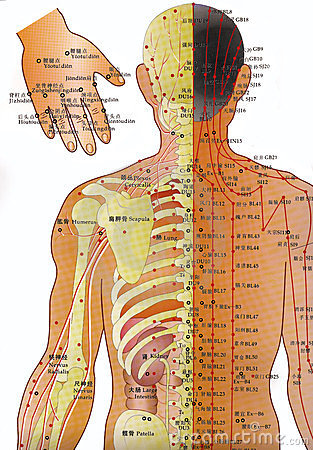 Acupuncture Chart - Alternative Medicine  Editorial Stock Image