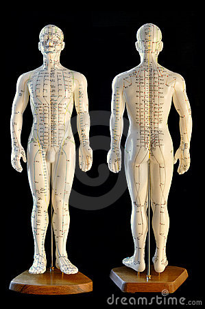 Free Acupuncture Model Stock Photos - 13119143
