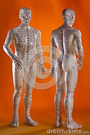 Acupuncture Model - Alternative Medicine - China