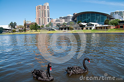 Adelaide Swans