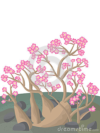 Free Adenium Desert Rose Royalty Free Stock Photography - 42468667