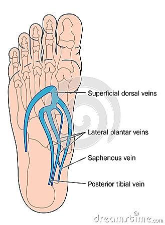 Aders van de voet