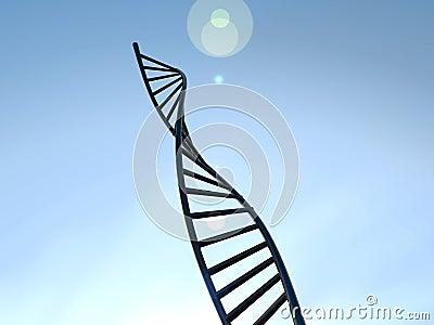 ADN 17