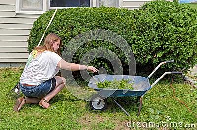 adolescent aidant avec le jardinage photos stock image 38017943. Black Bedroom Furniture Sets. Home Design Ideas