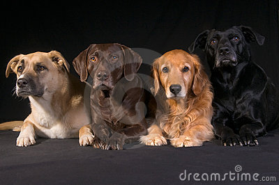 Adopted Diversity Dog Family