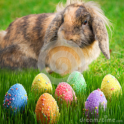 Adorable bunny and Easter eggs