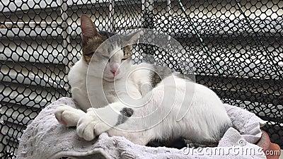 Adorable chat s'endort sur le tapis clips vidéos