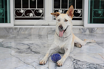 Adorable dog with blue ball