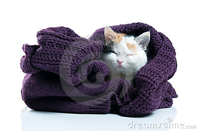 Adorable kitten sleeping