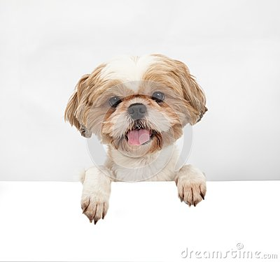 Free Adorable Little Dog Stock Images - 25636404