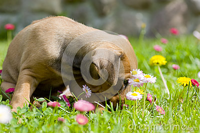 Adorable little puppy between summer flowers