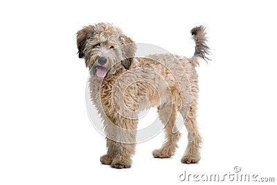 Adorable mongrel dog