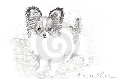 Adorable Papillon Puppy Hand Drawn Art