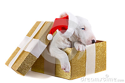 Adorable puppy in Christmas present box