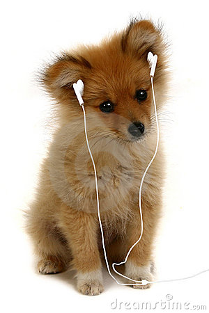 Adorable Puppy Listening to Music
