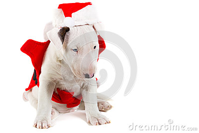 Adorable puppy in Santa costume