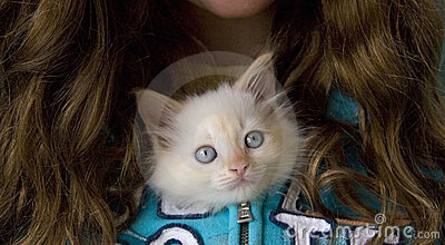 Adorable Shelter Kitten