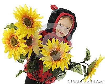 Adorable Sunflower Bug