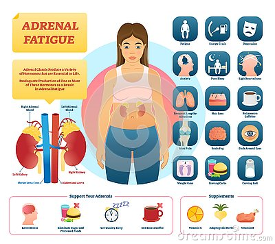 Free Adrenal Fatigue Vector Illustration. List Of Glands Disease Symptoms. Stock Photography - 130685532