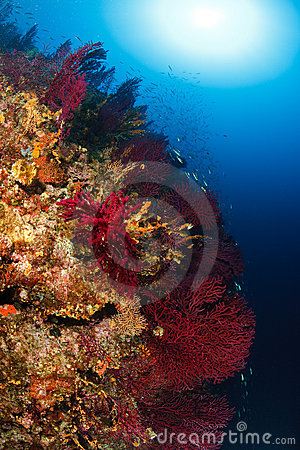 Free Adriatic Underwater Ambient Stock Photography - 11092072