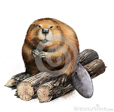 Free Adult Beaver Sitting On Logs. Stock Photography - 29781632