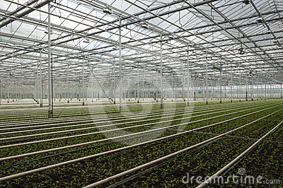 Advanced Dutch greenhouse complex small plants