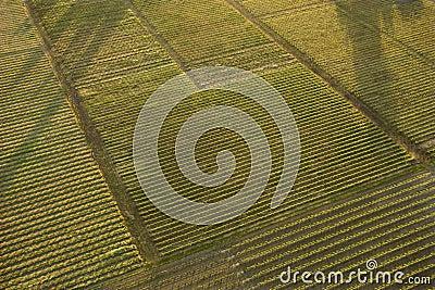 Aerial of crops.