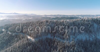 Aerial drone view in mountain forest. Winter landscape. Fly over Frozen Snowy Fir and Pine trees 4k. Carpathian Mountains, Ukraine. 4k Aerial Drone footage snow stock video