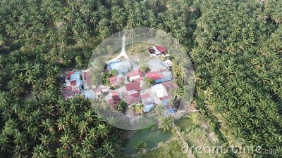 Small village in oil palm tree. stock video