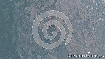 AERIAL, Golfinho TOP DOWN com um filhote vídeos de arquivo
