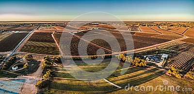 Aerial panorama of rectangles of vineyards in Monash. Stock Photo