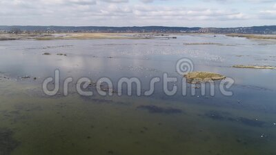 Aerial photos at the resting place of water birds in flooded fields stock video