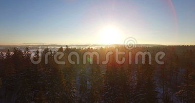 Aerial Smooth Drone Flight Through And Above Fir Trees