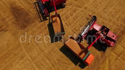 Aerial view Combine Harvester gathers the wheat at sunset. Harvesting grain field, crop season. Beautiful natural aerial. Aerial view Combine Harvester gathers stock video footage