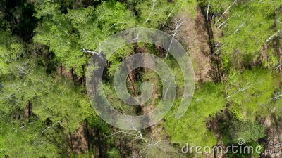 Aerial view of forest at spring. stock footage