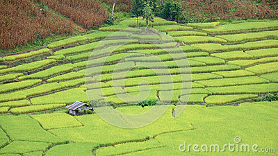 Aerial view of house at rice field terraces
