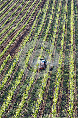 Free Aerial View Of In His Vineyard Working Wine Farmer Stock Photography - 39012182