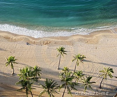 Aerial view of palm tree on the beach