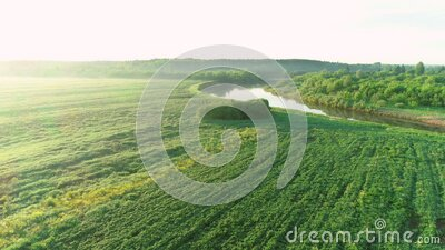 Aerial view of river and forest at summer sunny day, sky reflecting in water. stock video footage
