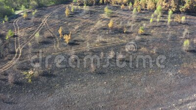 Aerial view scorched earth and tree trunks after a spring fire in forest. Black burnt field. Extraordinary incident. Consequences of a forest fire stock video footage